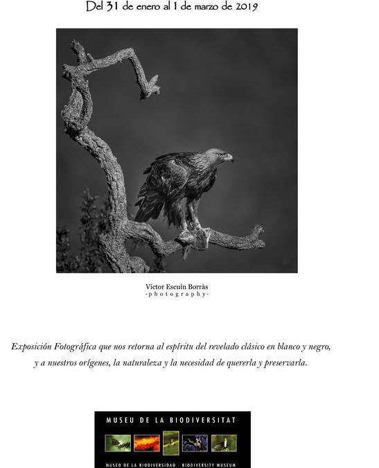 """Exposición fotográfica """"Naturaleza en B&N, de vuelta a los orígenes"""""""